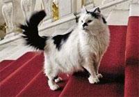В США вышла книга про эрмитажных котов